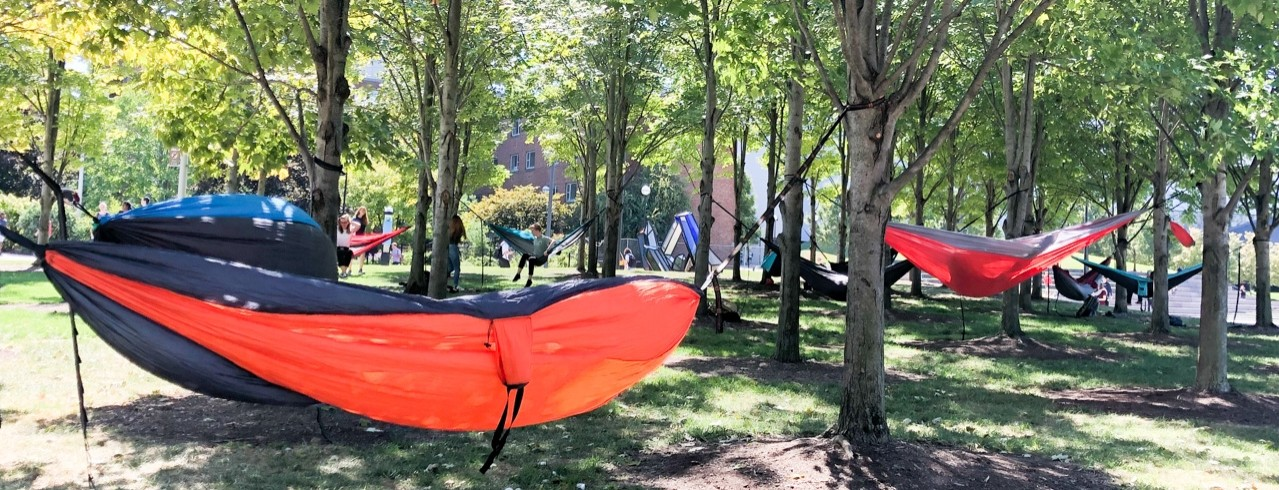 Students study in hammocks hanging from trees on Sigma Sigma Commons