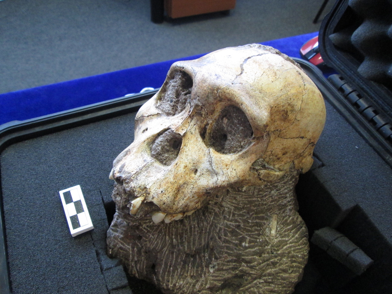 Featured image for Forensic anthropologist to lecture on hominin findings