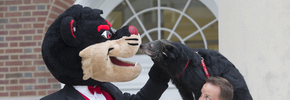 Bearcat mascot with Lucy the Bearcat.
