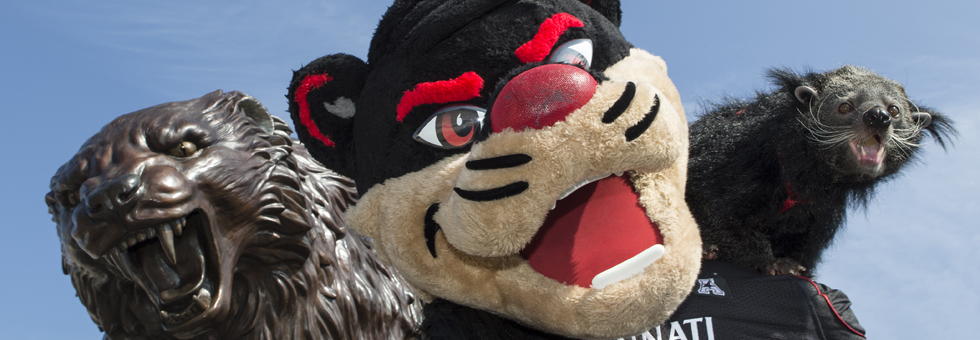 Bearcats statue, Bearcat mascot and Lucy the Bearcat.