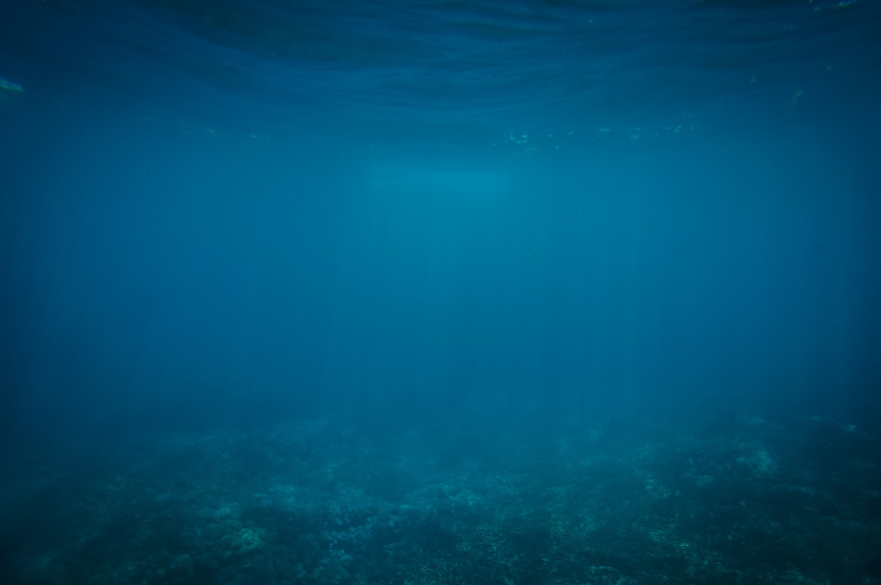 underwater image of bottom of ocean