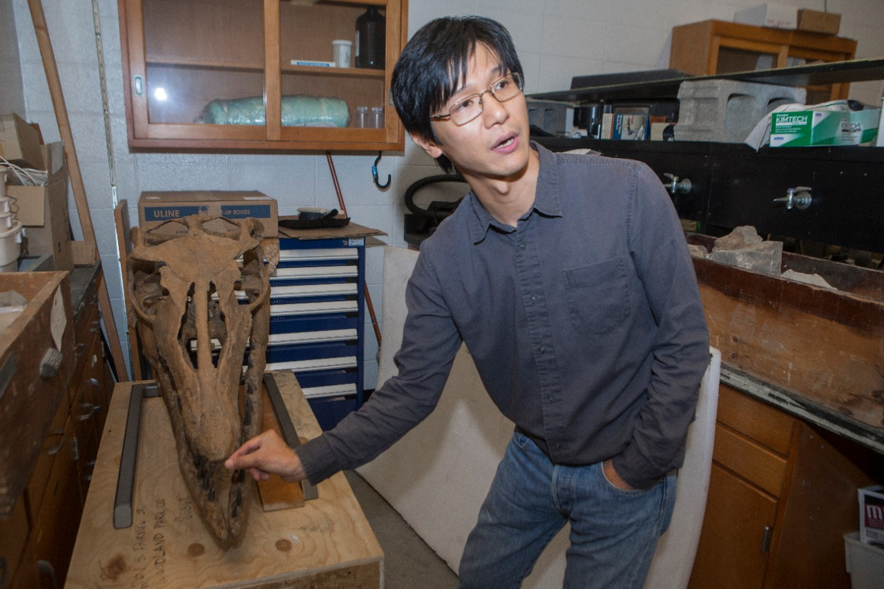 UC biology professor Takuya Konishi gestures to the snout of a mosasaur skull in his lab.