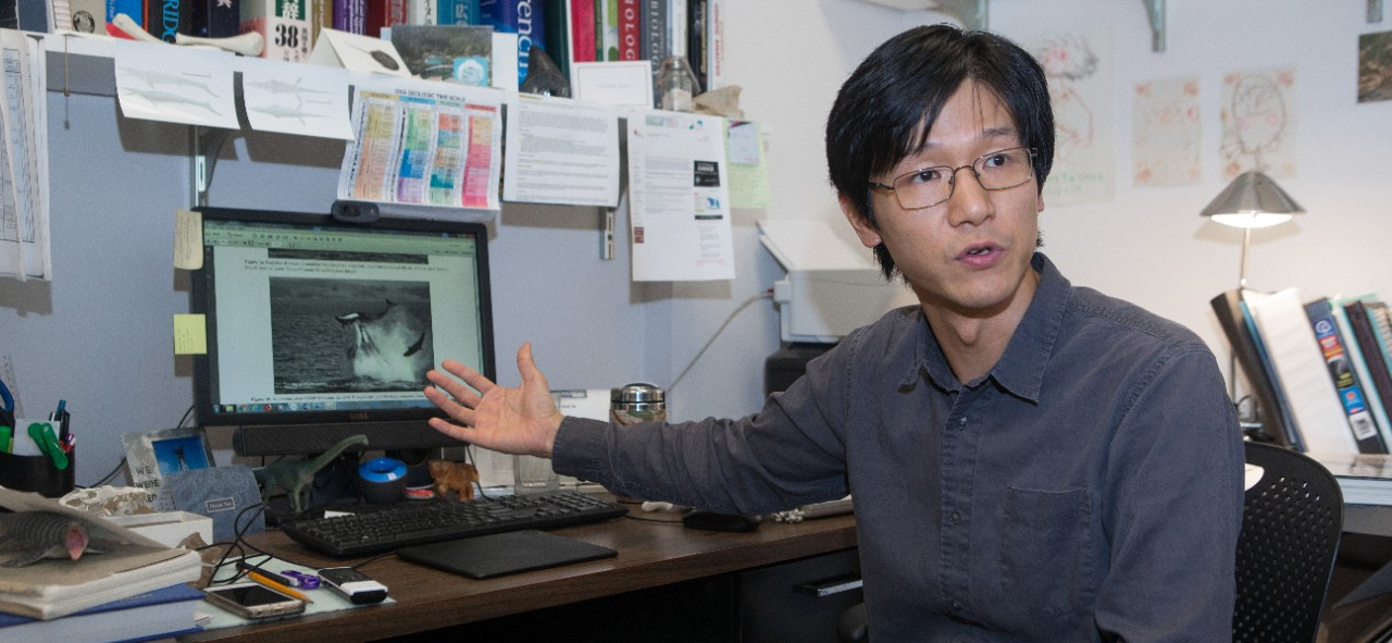 UC biology professor Takuya Konishi sits at his desk gesturing to his computer screen showing an image of an orca ramming a false killer whale.