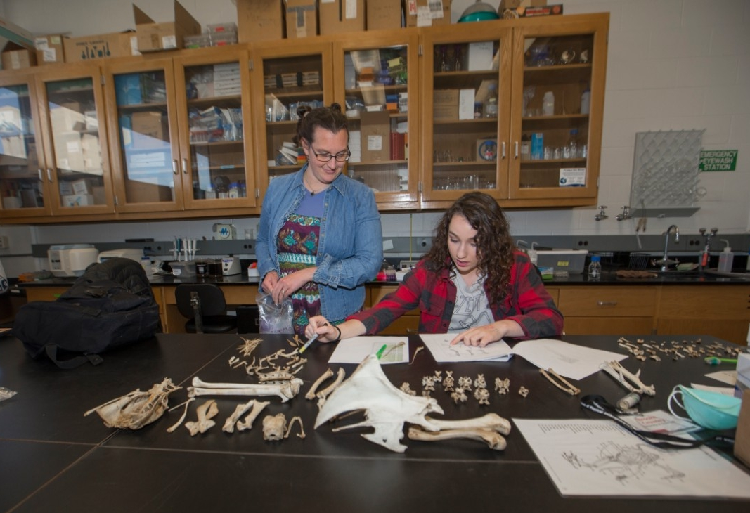 Brooke Crowley stands next to Madelyn Moeller who is at a lab bench cataloguing bones.