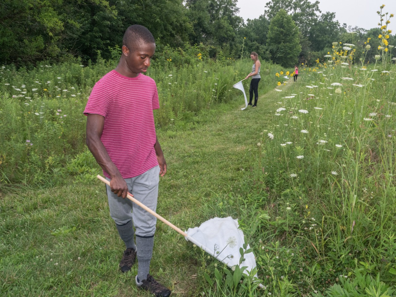 A UC student in long pants and a T-shirt drags a white linen flag along tall weeds with other students doing likewise behind him.