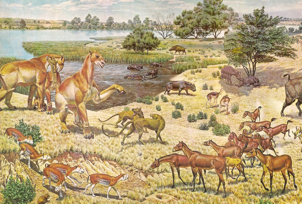 A color drawing of various wildlife from the Miocene interacting at a lake on a sunny day.