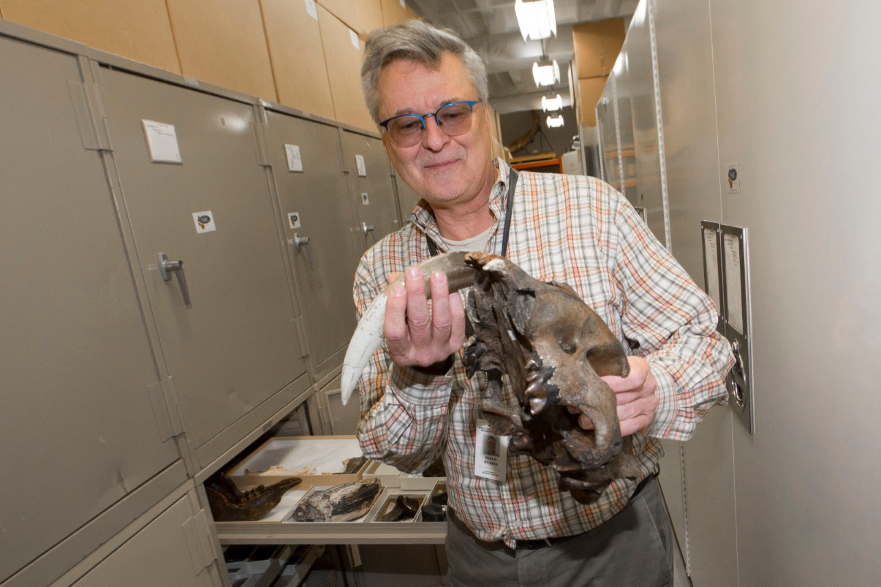 Glenn Storrs holds up the fossilized skull of an enormous saber-toothed cat  while standing among rows of preservation cabinets.