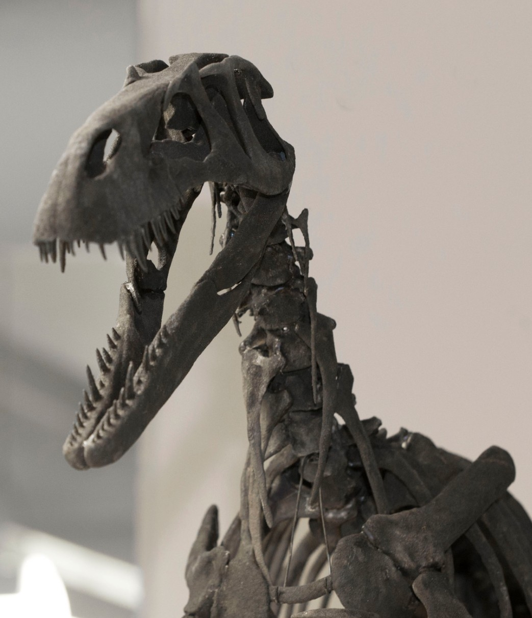 A scale model of the Torvosaurus sits on a cabinet.