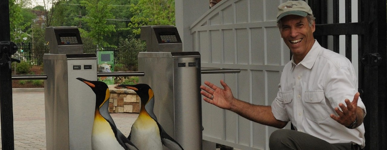 two penguins and man with open arms at zoo