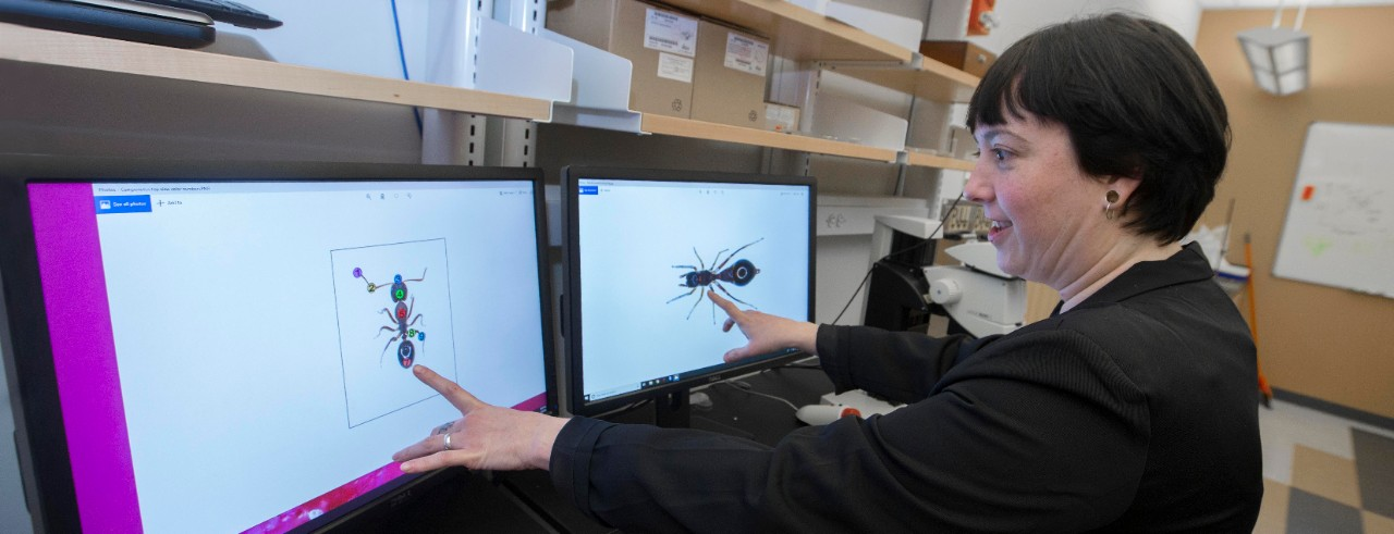 UC student Alexis Dodson gestures to an image of an ant on her computer screen in a biology lab full of equipment on shelves.