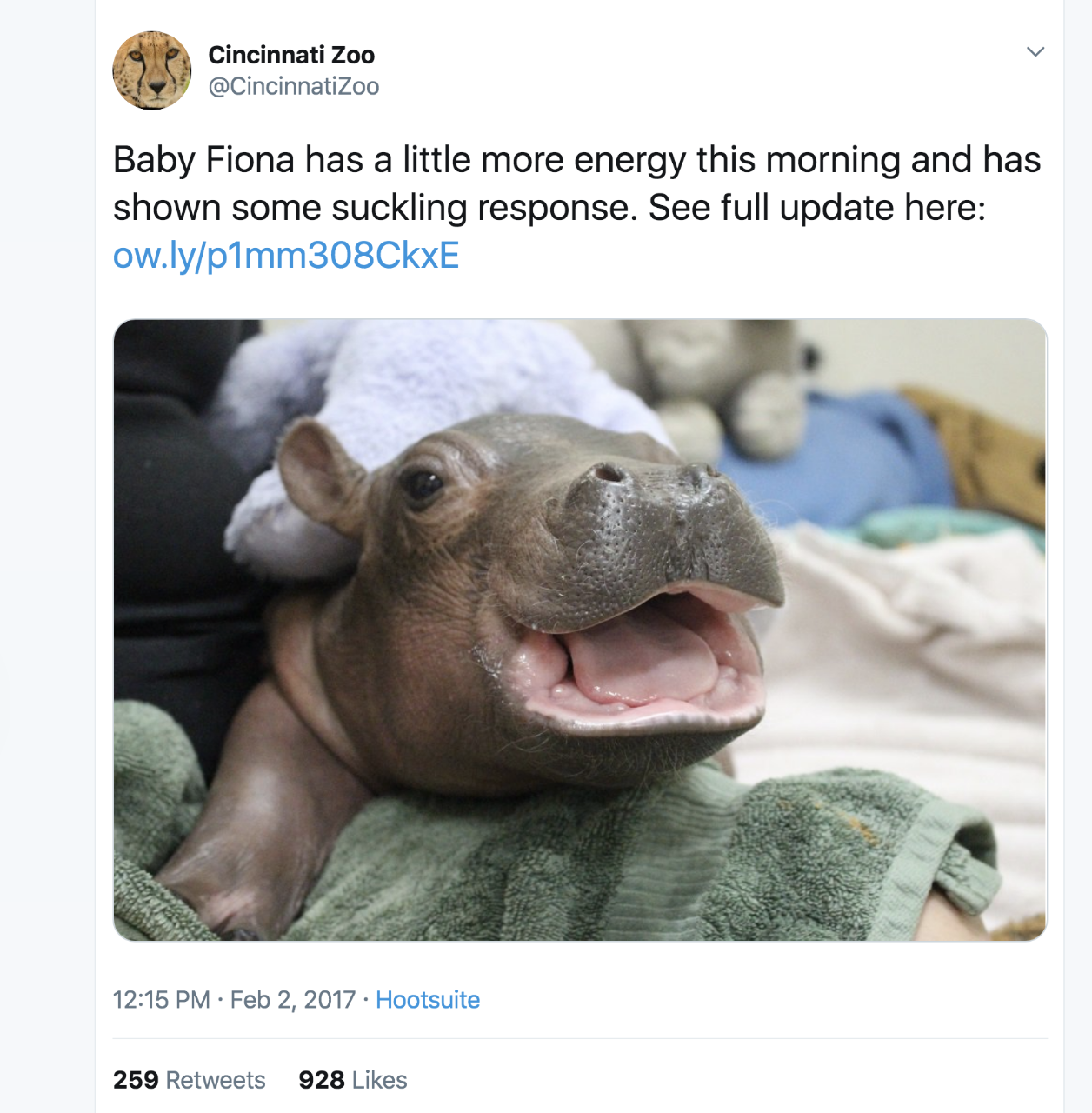 "A Cincinnati Zoo tweet shows a picture of a baby hippo and the text: ""Baby Fiona has a little more energy this morning and has shown some suckling response. See full update here."""