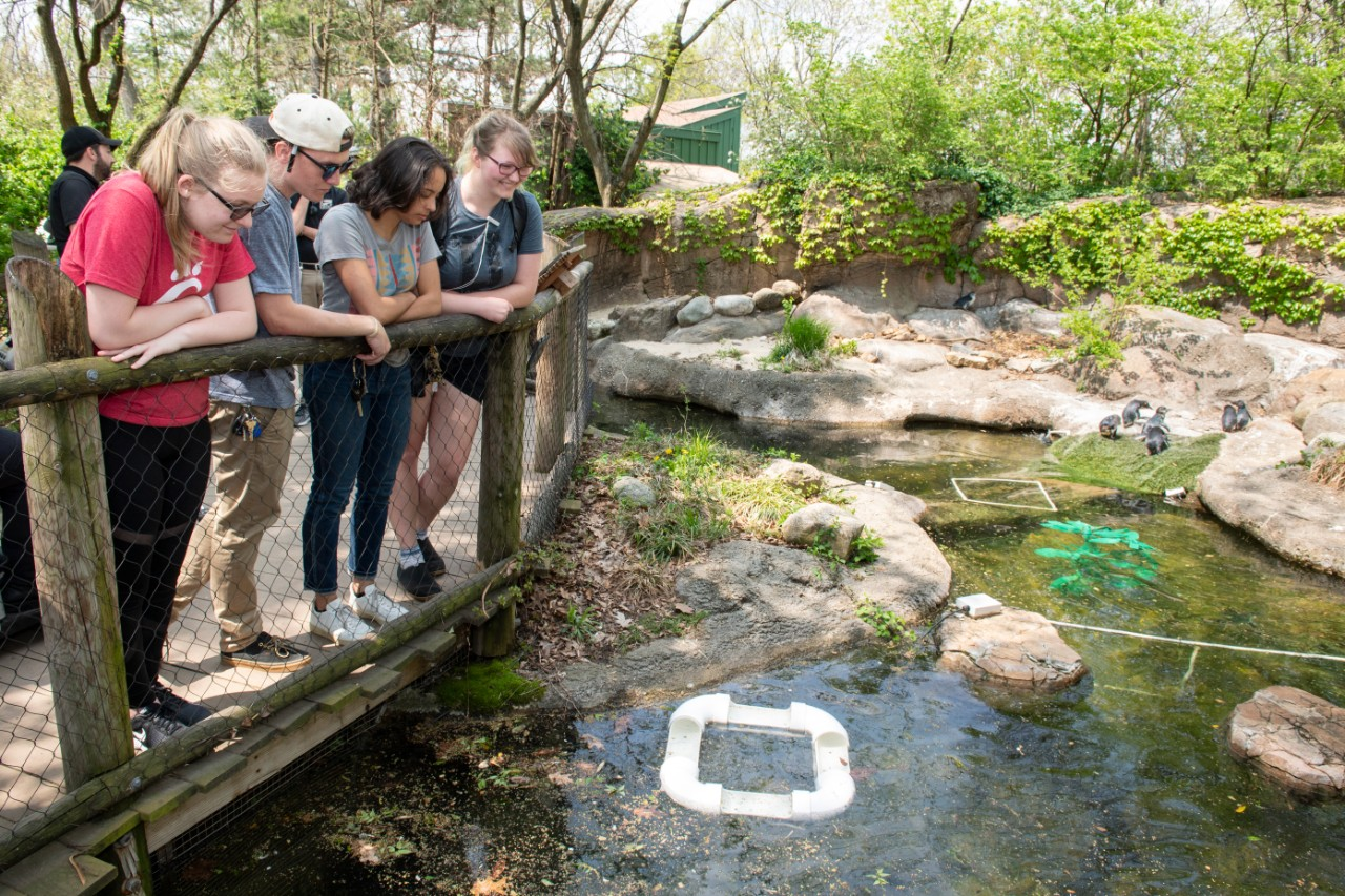 Students stand at a railing looking at a little pond containing a floating feeder trough for the little penguins.