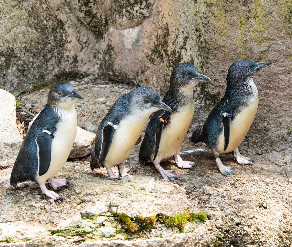 Four little penguins.