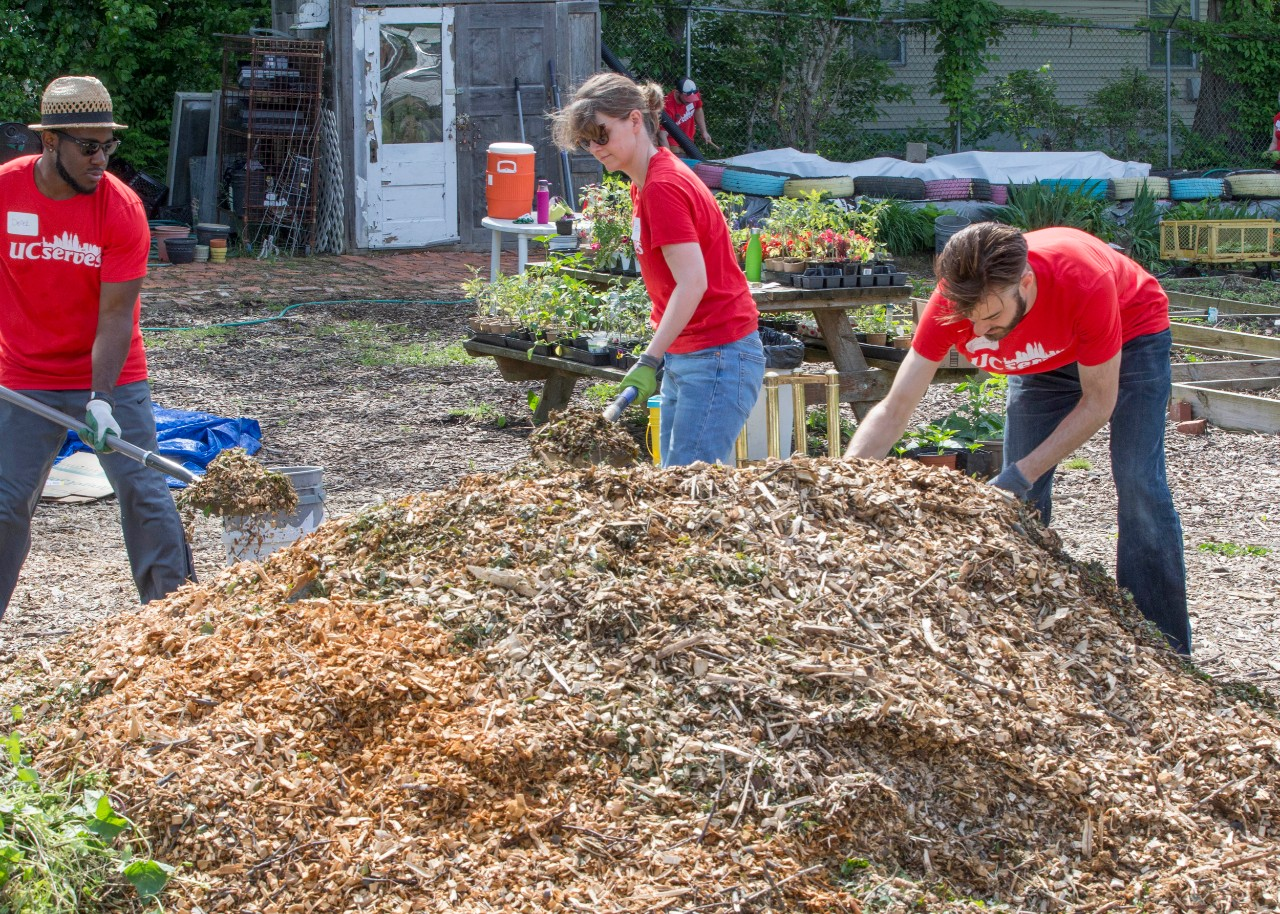 Three people shovel mulch using shovels in a garden.