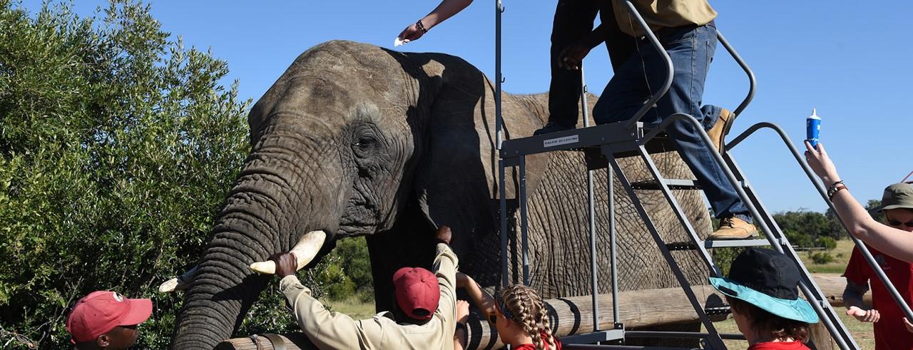 What the heard herd: UC team studies African elephants
