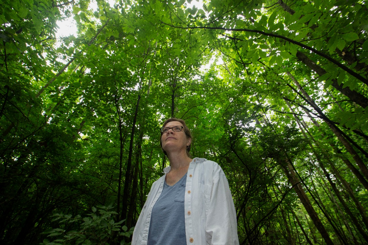 A low perspective shot depicts a person standing with the tall tree canopy over her.