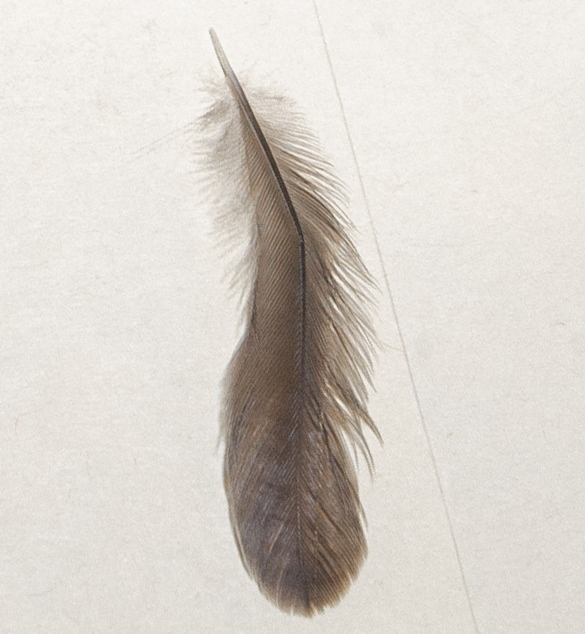 A feather.