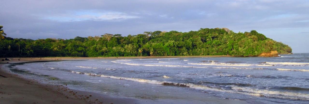 Ocean waves against tall vegetation along the shoreline in Trinidad.