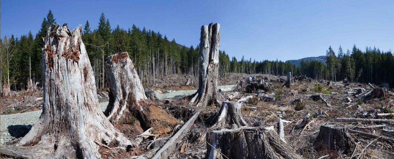 A clearcut forest.