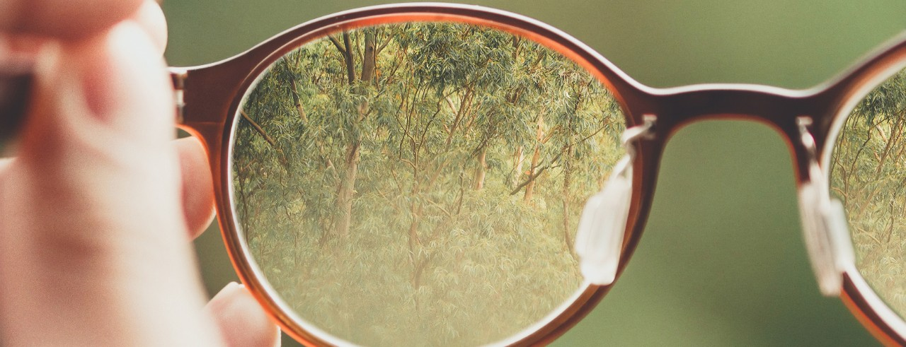 Zoom in on brown glasses with trees in the lenses.