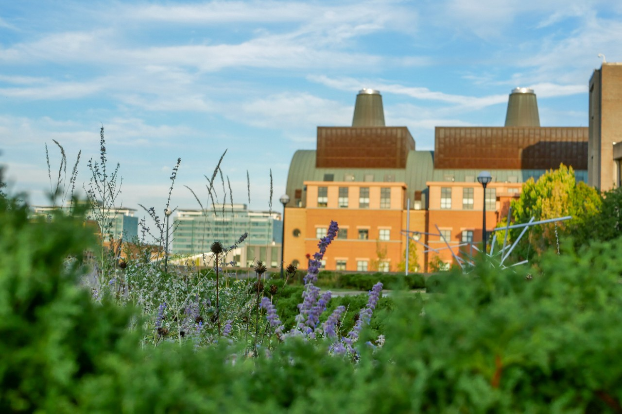 a view of the Engineering Research Center from a distance against a cloudy blue sky, with grass and flowers in the foreground