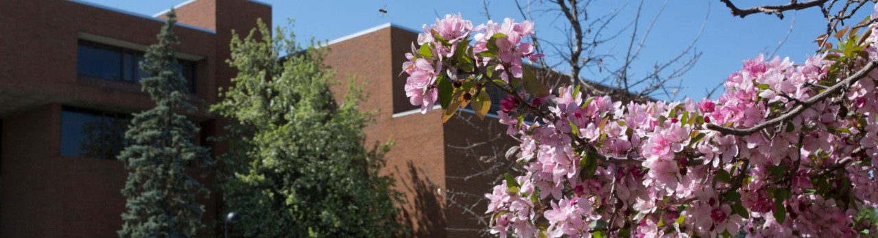 brick building surrounded by green trees and pink flowering trees