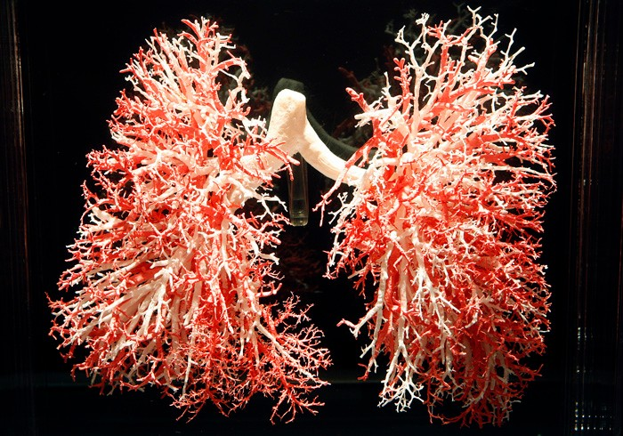 a 3-D model of the human lung circulatory system