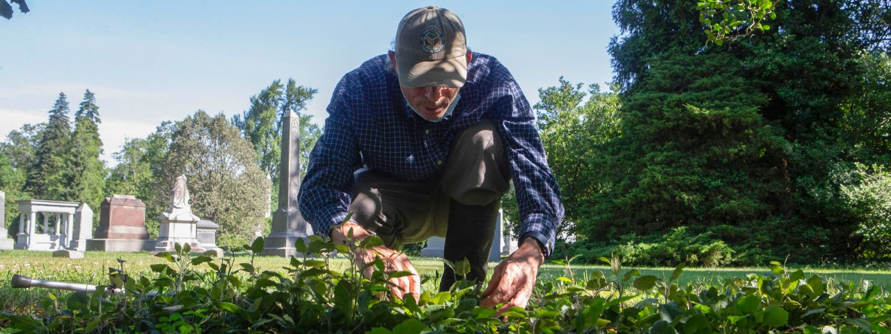 Denis Conover kneels over a grave to examine green plants.