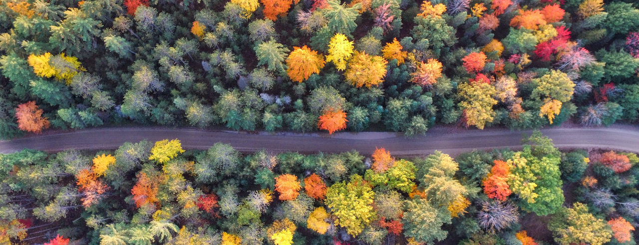 an aerial view of a forest with a road cutting through the middle of it, horizontally