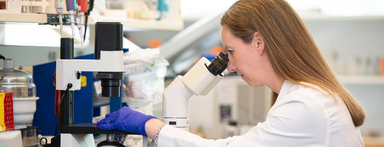 Doctor examines specimens using a microscope