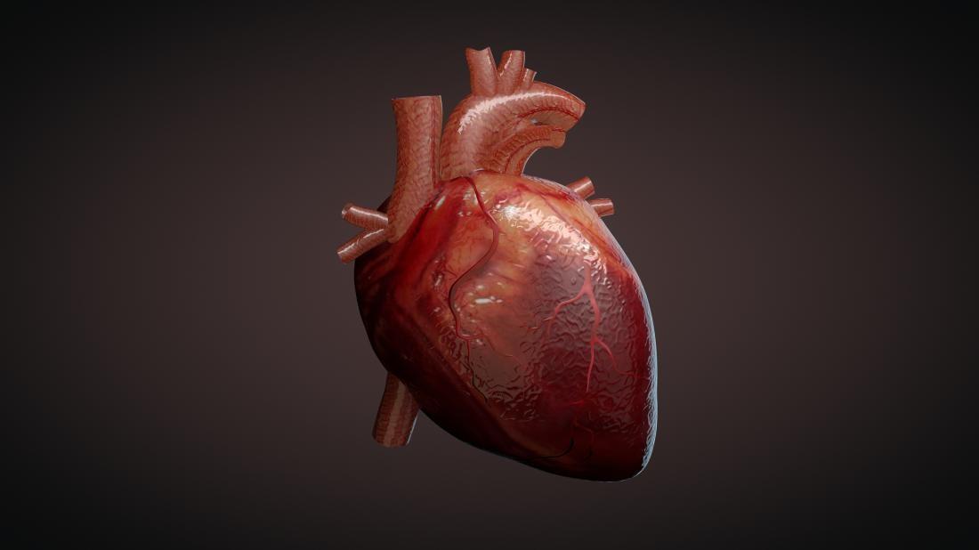 a 3d illustration of a heart