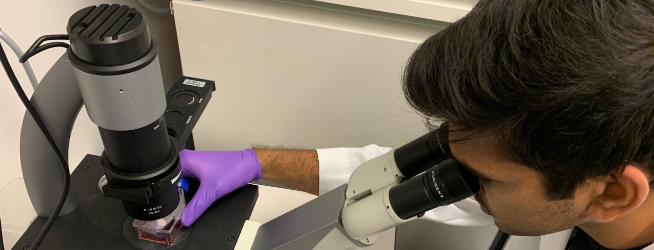 Student studies a sample using a microscope