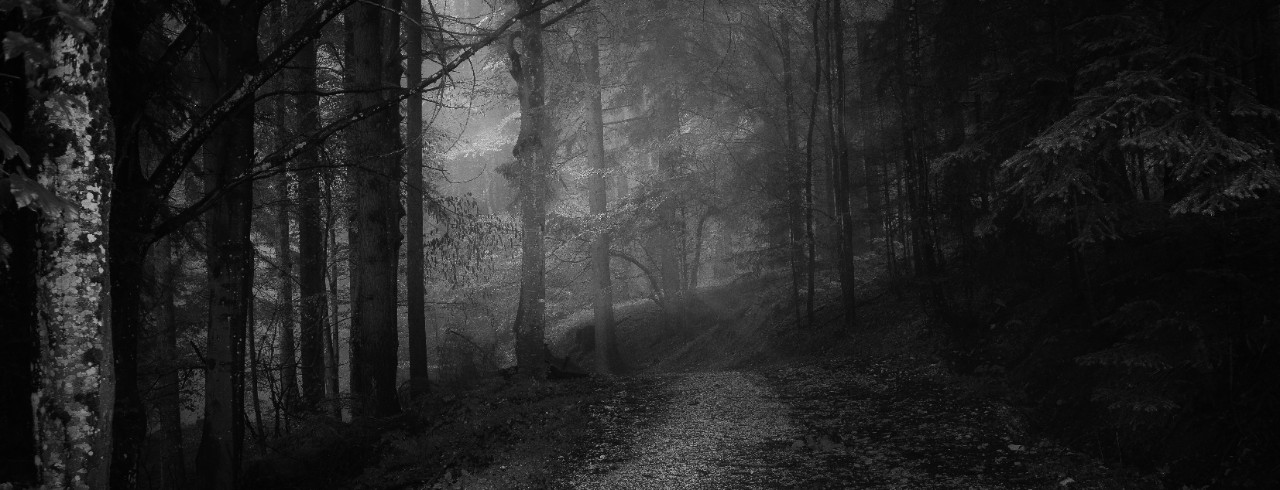 A forest path in moonlight